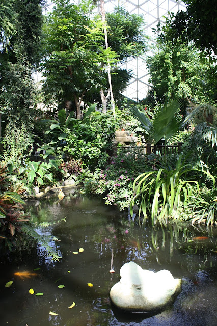 Calm koi pond in the Tropical Dome.