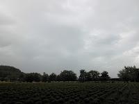 fattoria tomita furano