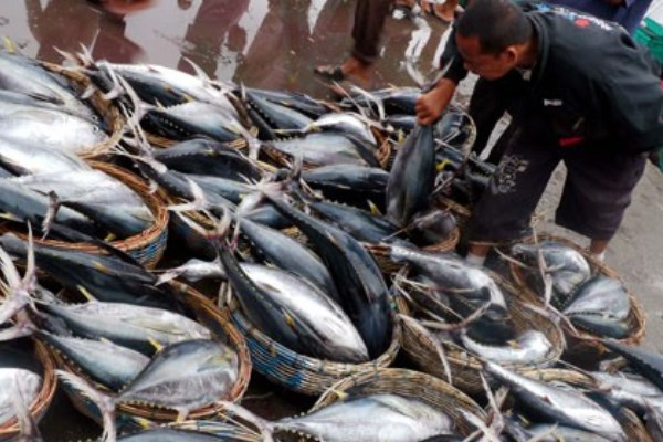 KKP Giatkan Kampanye Gemar Makan Ikan