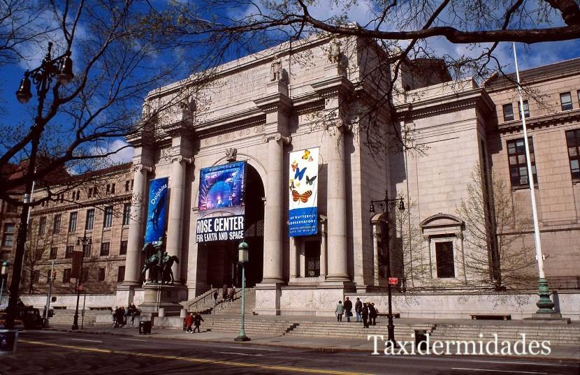 Grandeur Du American Museum Of Natural History 41