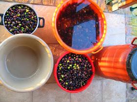 Φτιάχνω ελιές καλαμών