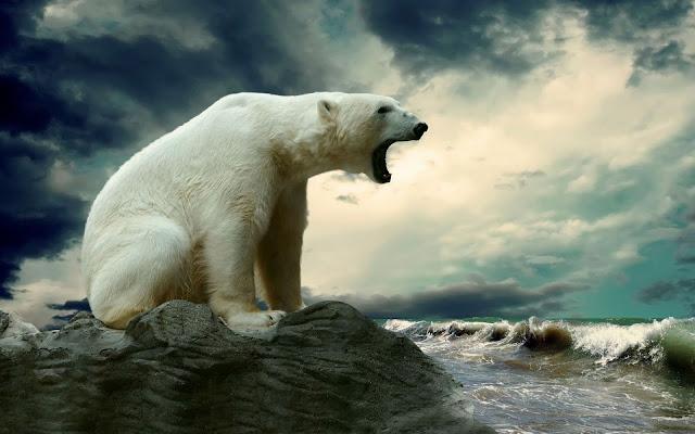 ursul alb