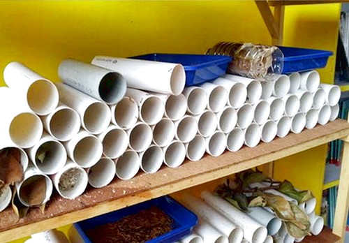 Budidaya Kroto Rangrang dengan Media Paralon