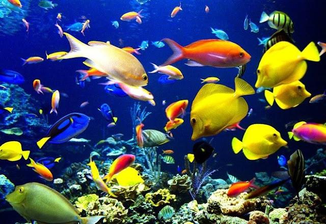 """تفسير رؤية السمك """"الحوت"""" في المنام"""