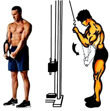 Stand arms Extension for triceps with pulley