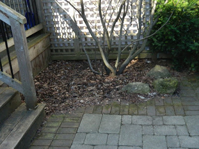 Roncesvalles Toronto spring garden cleanup before Paul Jung Gardening Services