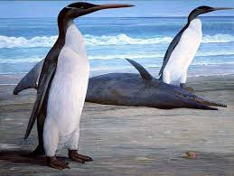 Eocene birds