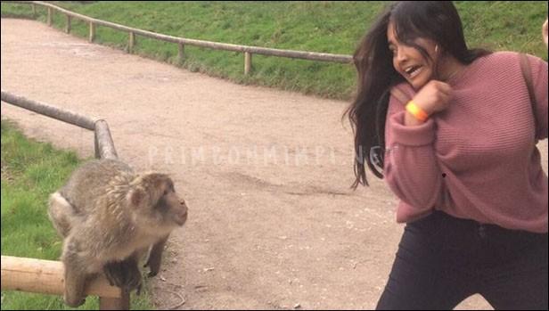 Mimpi Dikejar Monyet