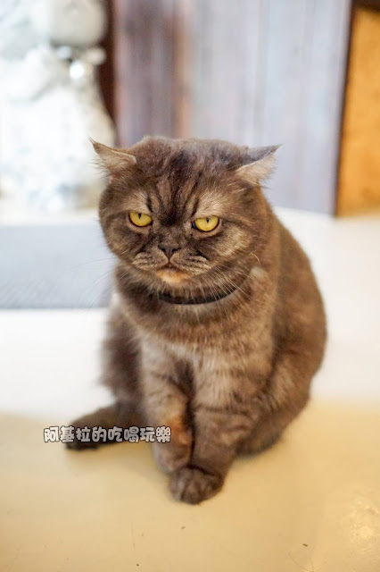 16707336 1232020220184554 3584651140325862920 o - 西式料理|貓爪子咖啡 Cat's Claw  Brunch & Cafe'