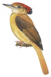 American endangered birds