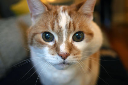 In memory of our adopted ginger cat Toby