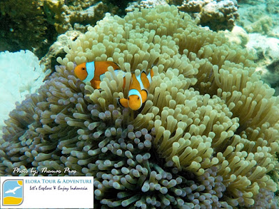 foto snorkeling pahawang