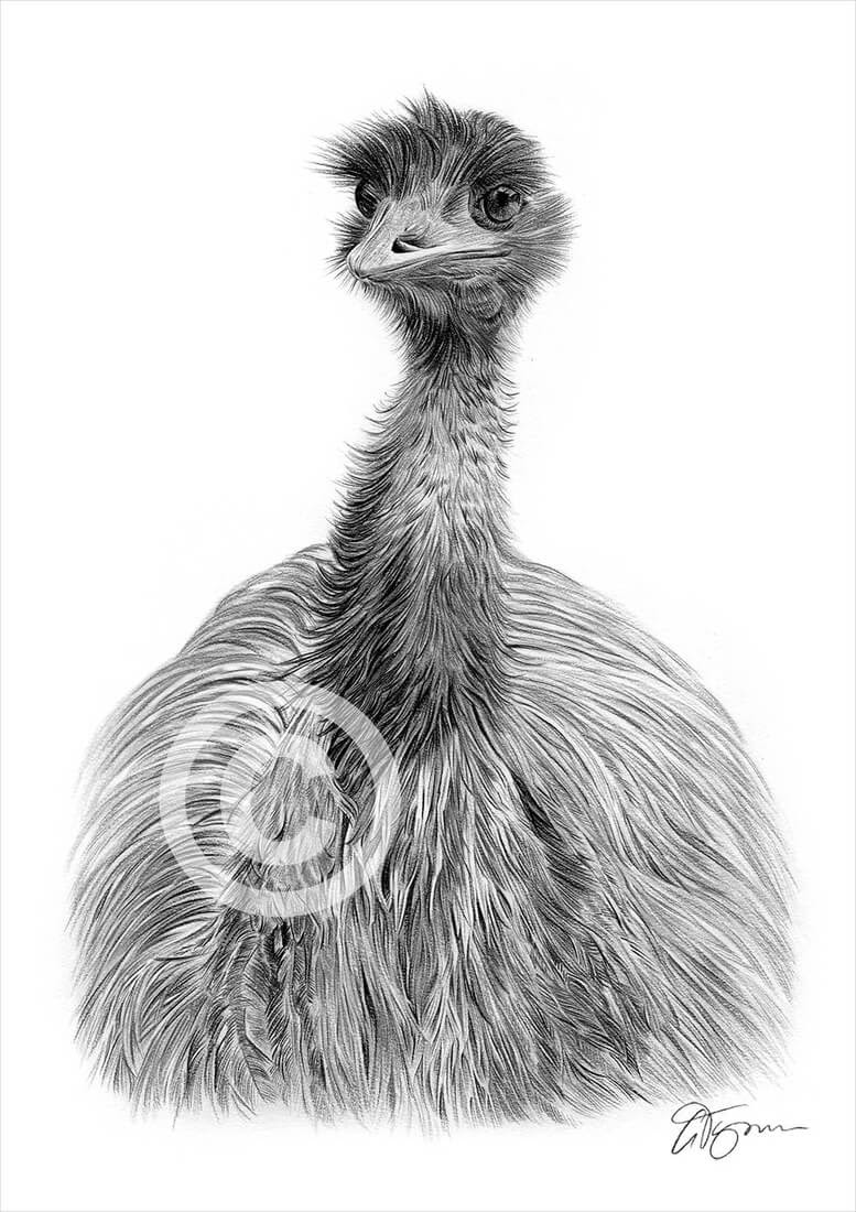 02-Emu-Gary-Tymon-Wildlife-and-Domestic-Animal-Pencil-Drawings-www-designstack-co
