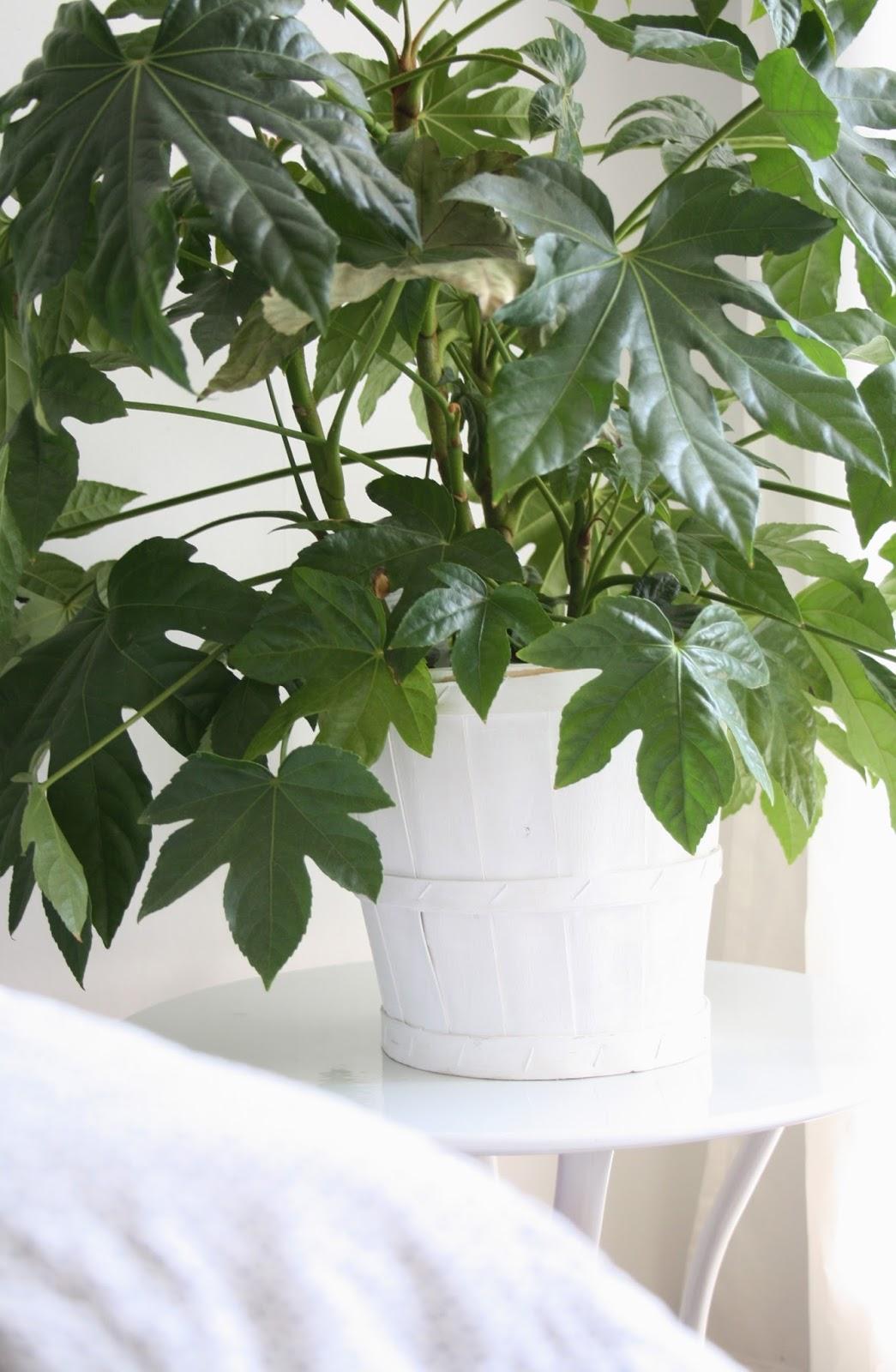 Scandi Pot Plant Living Room