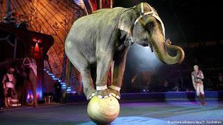एक शिक्षाप्रद कहानी-सर्कस का हाथी