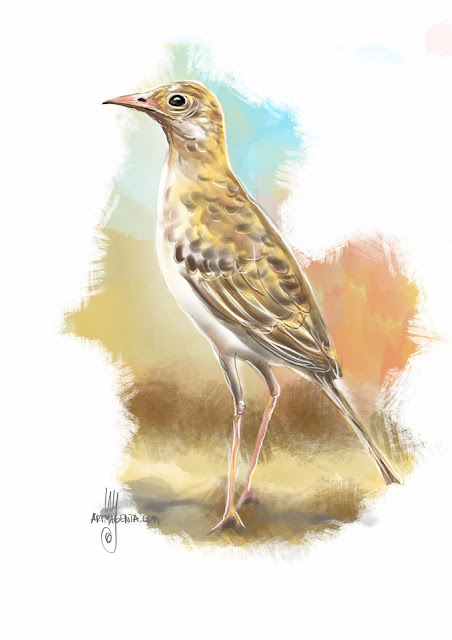 Richard's pipit bird painting by Artmagenta