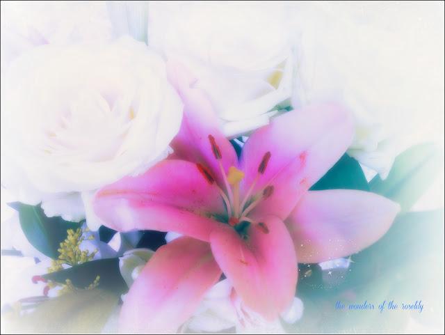 freddies flowers