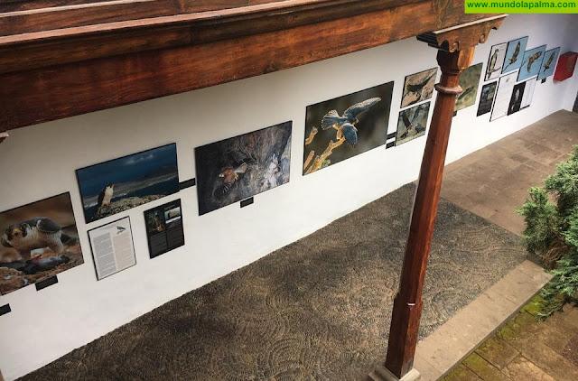 La exposición sobre aves rapaces de Canarias estará abierta hasta el 28 de junio