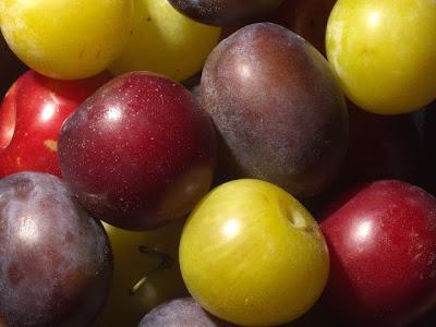 صورة جميلة جدا تجمع بين فواكه التفاح والبرقوق