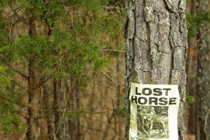 Lost horse sign