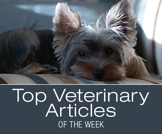 Top Veterinary Articles of the Week: Acute Pancreatitis Management, and more ...