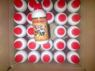 distributor viterna plus nasa bukittinggi