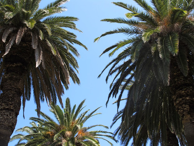 Palm trees in Corfu, Greece
