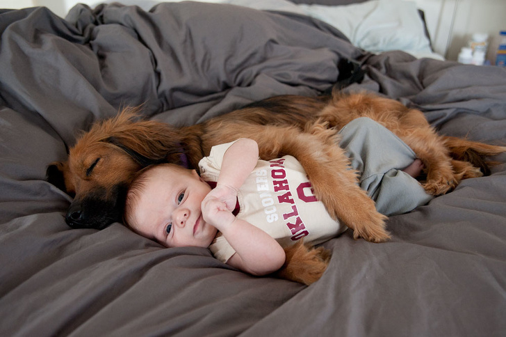 24 Heart-Melting Pictures Of Dogs Who Truly Love Their Human Companions