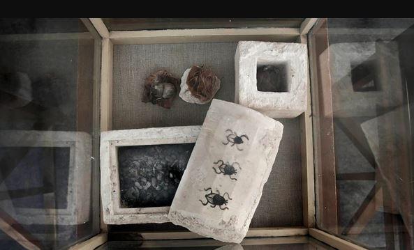 Mummies Discovered