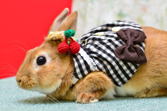 うさぎのファッションショー うさコレ・うさフェスタ2016 春 Vol.4