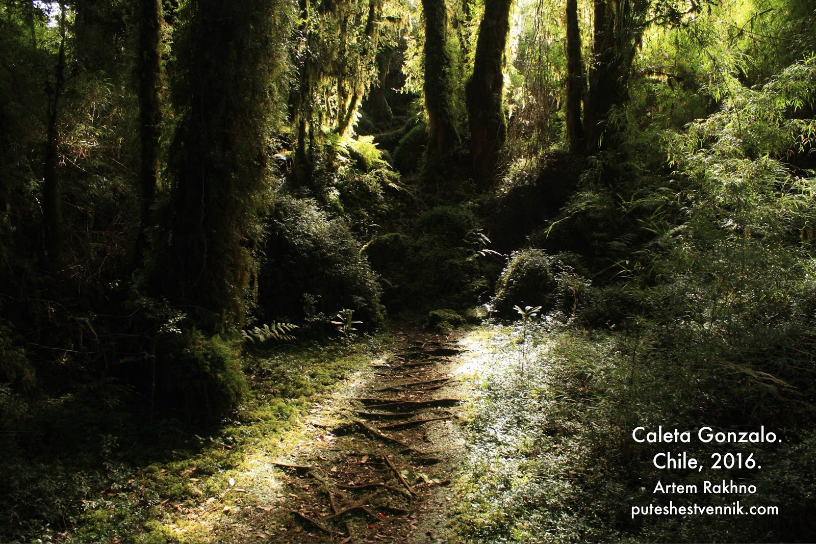 Лес в парке Пумалин в Чили