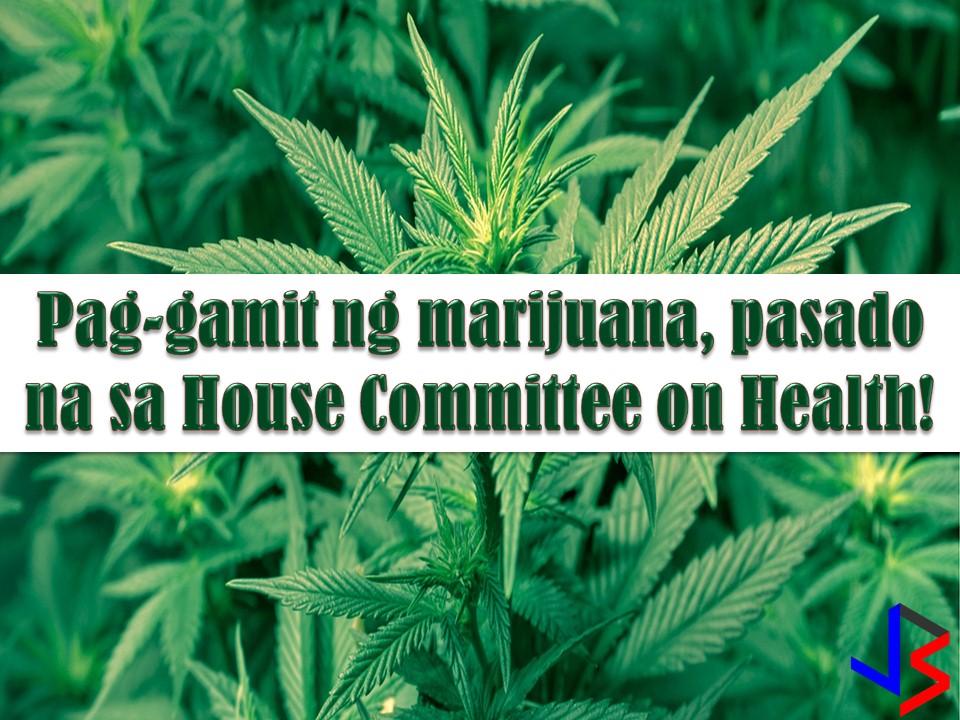 The bill pushing to legalize the use of marijuana for medical purpose in the Philippines has been approved in Committee on Health.