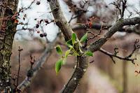 blur branch close up