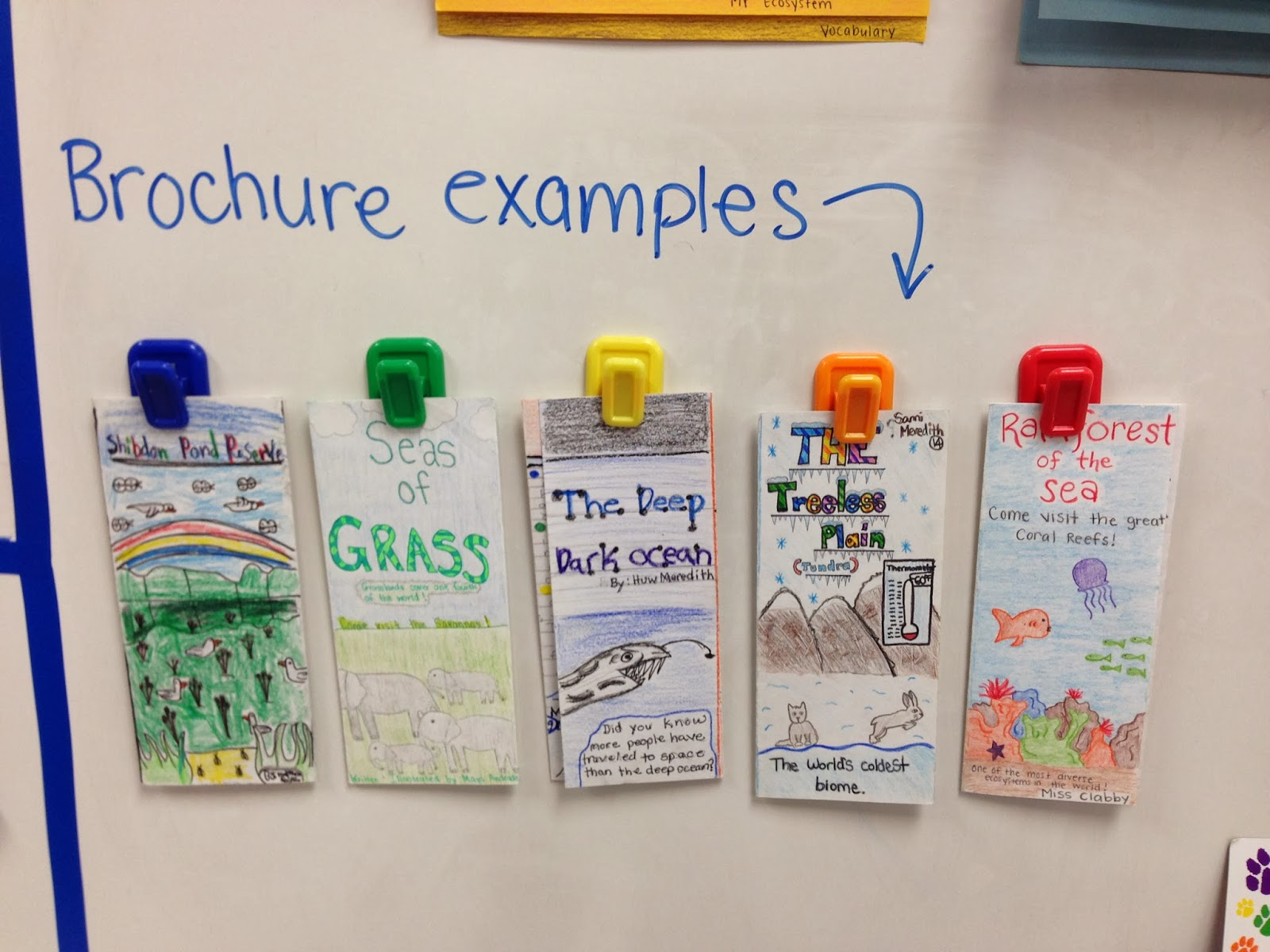 Ecosystems Brochure Project on Cell Projects For 5th Graders