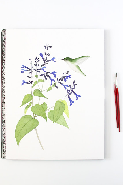 watercolor hummingbird, watercolor flowers, botanical watercolor, black and blue salvia, Anne Butera, My Giant Strawberry