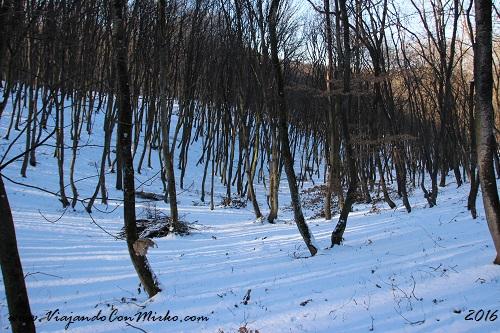 Bosque Hoia Baciu Rumania
