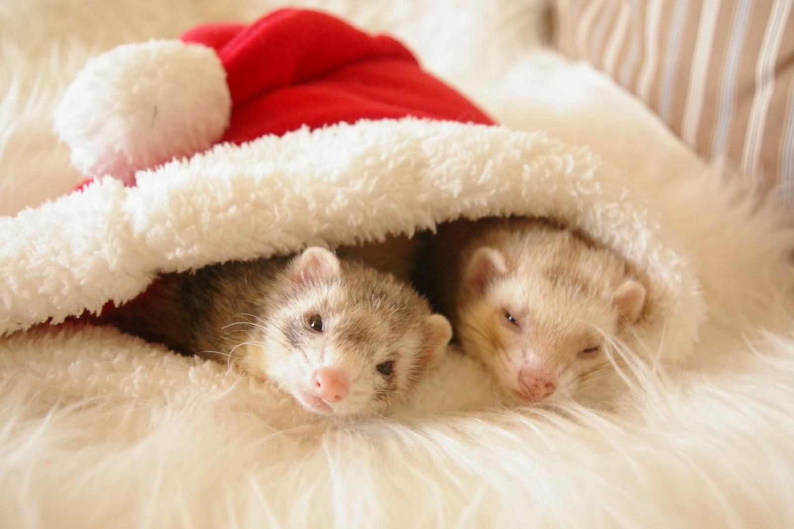 Tierische Weihnachtsgrüße.Klein E S Haus Tierische Weihnachten