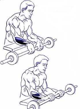 Flexión y extensión de antebrazos en pronación.