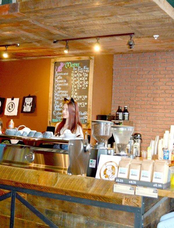meowtropolitan cat café