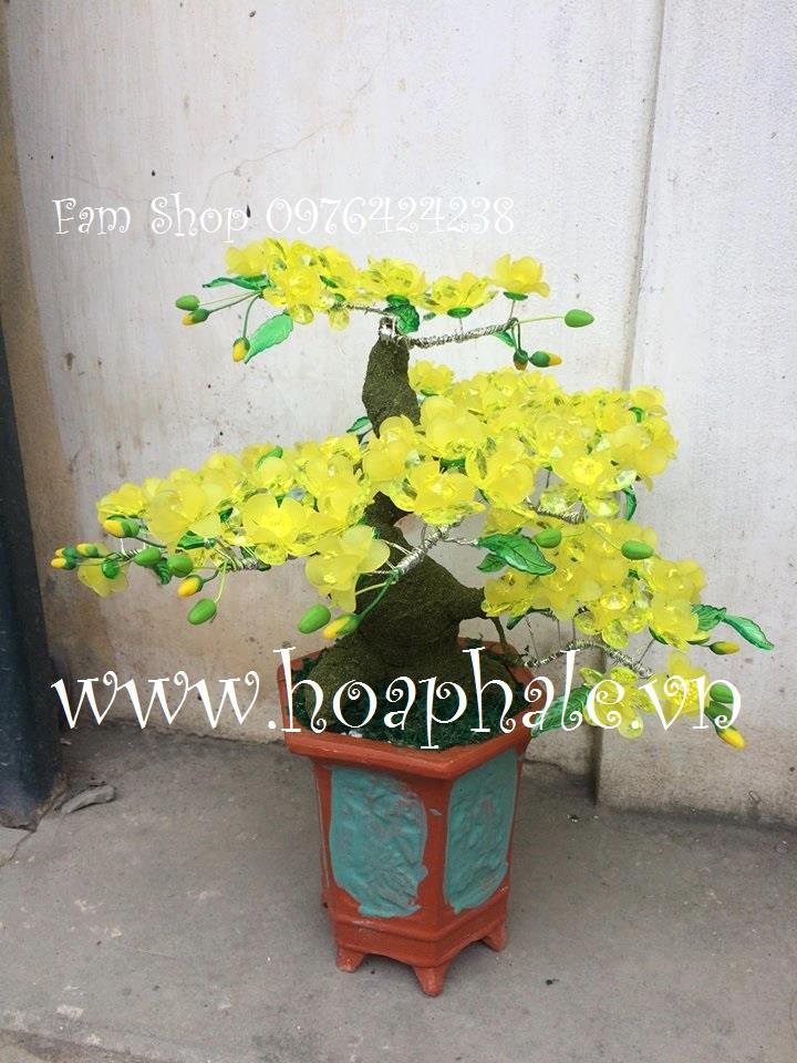 Goc bonsai mai dao o Van Ho