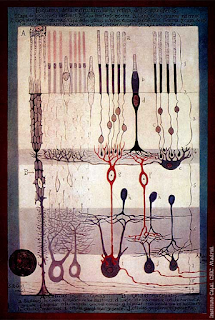 The structure of the retina, a drawing by Santiago Ramon y Cajal.