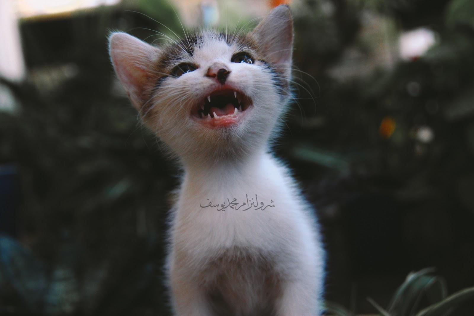 Anak Kucing Yang Comel Dan Riang - 3