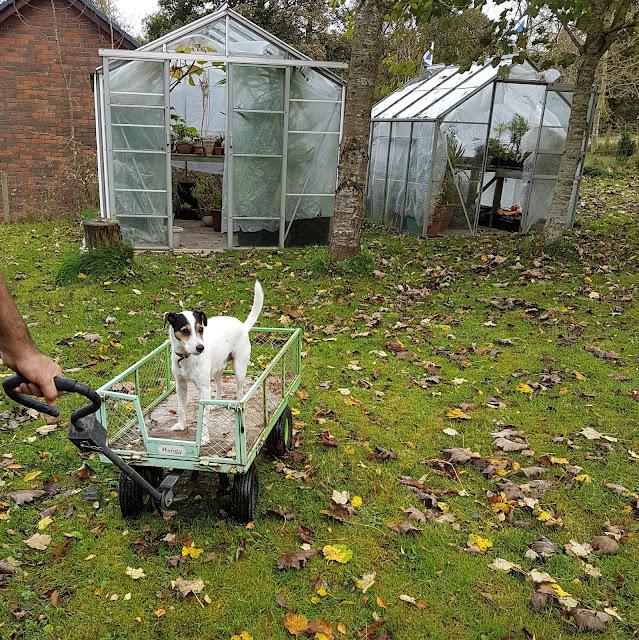 Bracken's idea of helping on the garden!