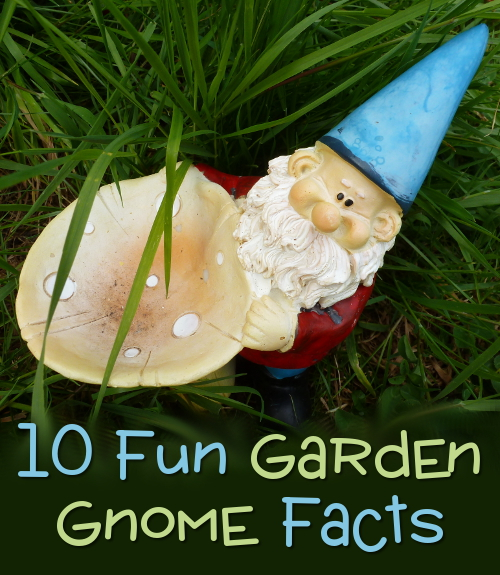 Garden gnome facts fun page for kids and adults