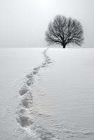 La glosa del arcángel de la nieve, Francisco Acuyo