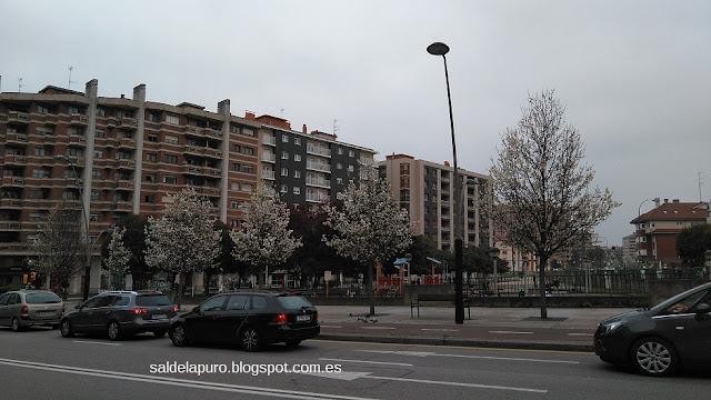 arboles-floridos-en-gijon