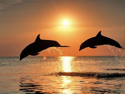 lumba lumba di objek wisata pantai lovina bali Tempat wisata di bali yang wajib anda kunjungi, wisata indonesia terbaik di bali, wisata bali terunik, pemandangan bali wisata terindah, visit bali parawisata terindah, tempat wisata terbaik di bali, bali visit place terbaik
