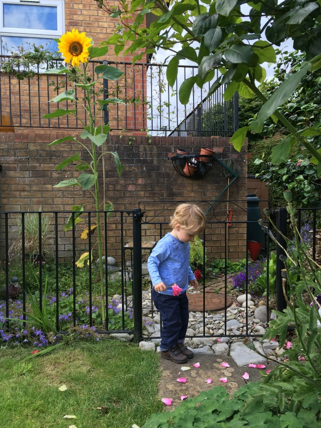 Big-Pit-big fish-big everything-toddler-with-rose-and-giant-sunflower