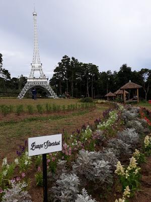 spot menara Eiffel dan bunga silverdust taman bunga celosia