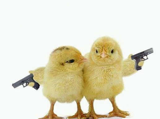 Funny animals got guns funny animals - Pictures of funny animals with guns ...